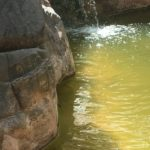 frog swimming in the first pool no thoroughfare canyon colorado national monument