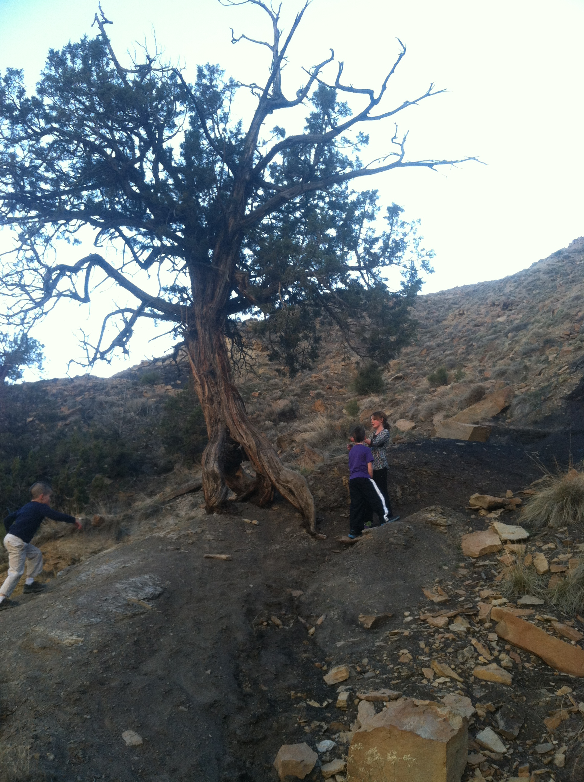 Lots of coal dirt on the trail, and this super cool tree with roots that looked like legs. Probably an Ent.
