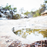 Spring Puddle in Red Canyon Colorado National Monument by Matt Janson Photography